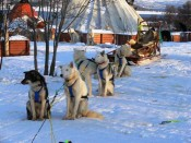 Trineos de perros en Laponia noruega.
