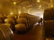 Crianza del vino en las barricas, en Bodegas Muga