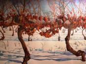 Cuadro de un vinyedo con uvas maduras de Icewine.