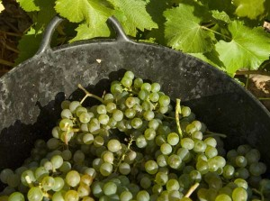 vinos do Rueda verdejo