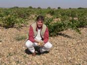Herve Birnie Scott, director tecnico de Numanthia en una vina vieja de Toro