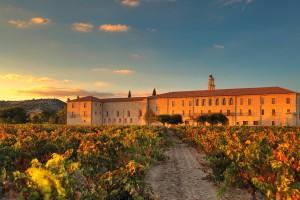 Vinedo de Abadia Retuerta en Sardon del Duero