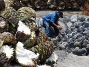 Horno de coccion del agave en Oaxaca