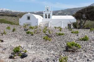 Vinyedo de assyrtko en Megalochori, sur de Santorini.