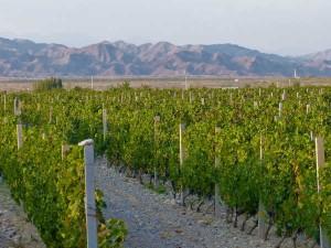 vinyedos de Chateau Terroir con las montanyas Helan